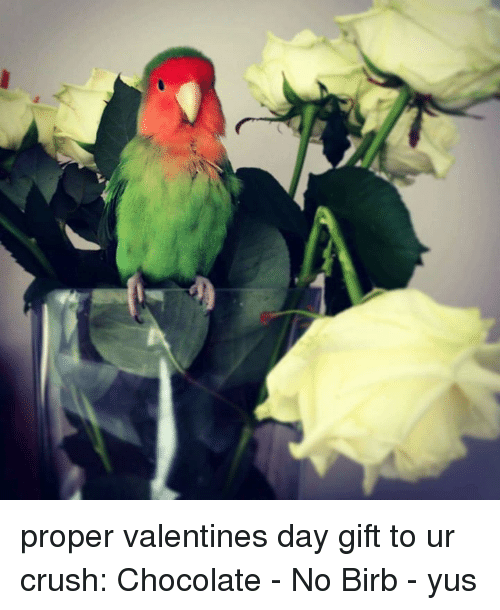 Crush, Valentine's Day, and Chocolate: proper valentines day gift to ur crush: Chocolate - No Birb - yus