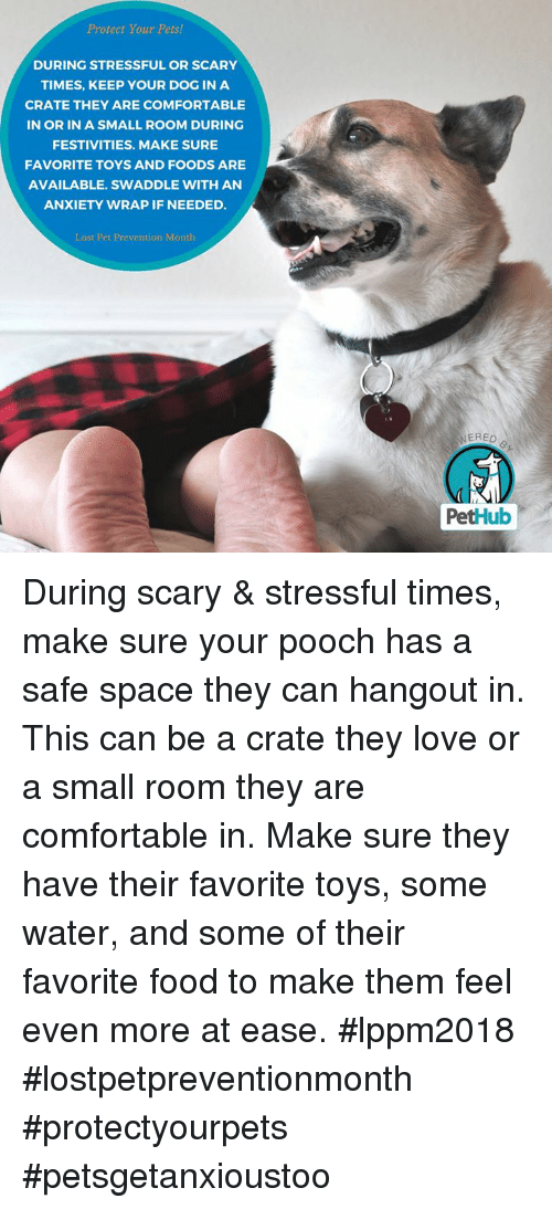 Protect Your Pets! DURING STRESSFUL OR SCARY TIMES KEEP YOUR DOG IN ...