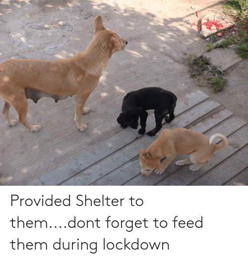 Provided Shelter to them....dont forget to feed them during lockdown