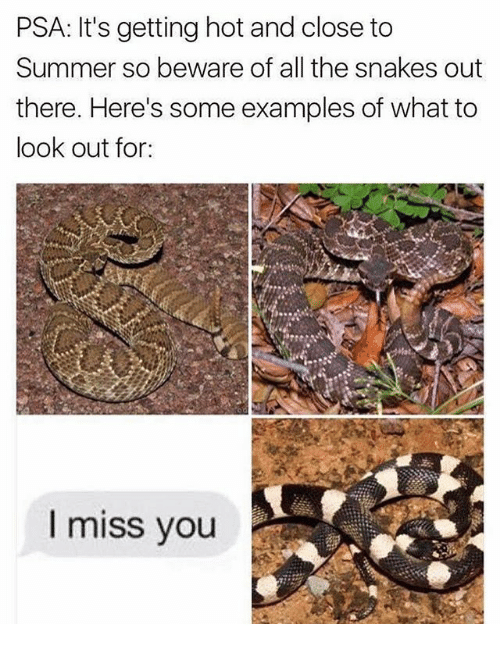 Summer, Snakes, and Dank Memes: PSA: It's getting hot and close to  Summer so beware of all the snakes out  there. Here's some examples of what to  look out for:  I miss you