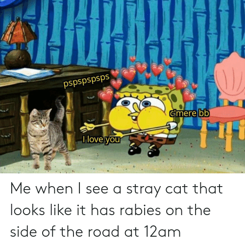 SpongeBob, The Road, and Cat: pspspspsps  Gmere bb  Ilove your Me when I see a stray cat that looks like it has rabies on the side of the road at 12am