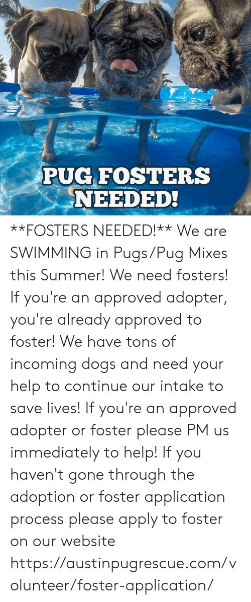 Dogs, Memes, and Summer: PUG FOSTERS  NEEDED! **FOSTERS NEEDED!**  We are SWIMMING in Pugs/Pug Mixes this Summer! We need fosters! If you're an approved adopter, you're already approved to foster!  We have tons of incoming dogs and need your help to continue our intake to save lives!   If you're an approved adopter or foster please PM us immediately to help!   If you haven't gone through the adoption or foster application process please apply to foster on our website https://austinpugrescue.com/volunteer/foster-application/