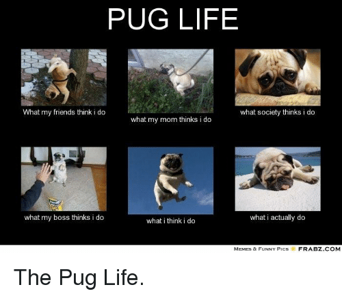 Pug Life What My Friends Think I Do What Society Thinks I Do What My