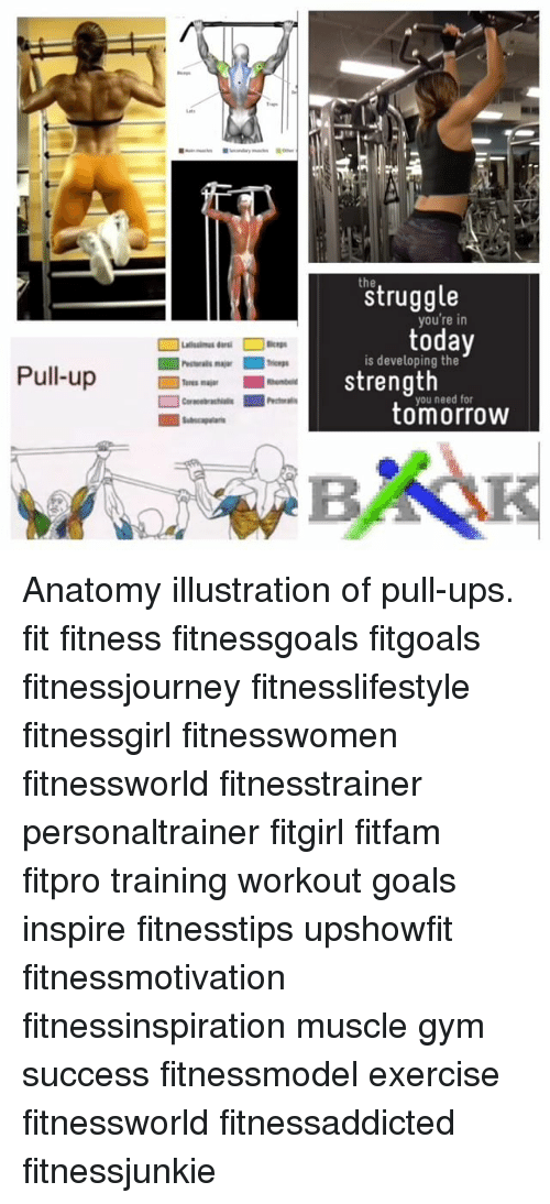 Pull-Up Struggle You\'re in Is Developing the Strength Tomorrow ...