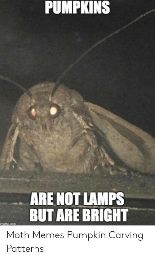 Pumpkins Are Not Lamps But Are Bright Moth Memes Pumpkin Carving