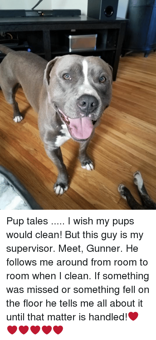 pup tales i wish my pups would clean but this guy is my supervisor