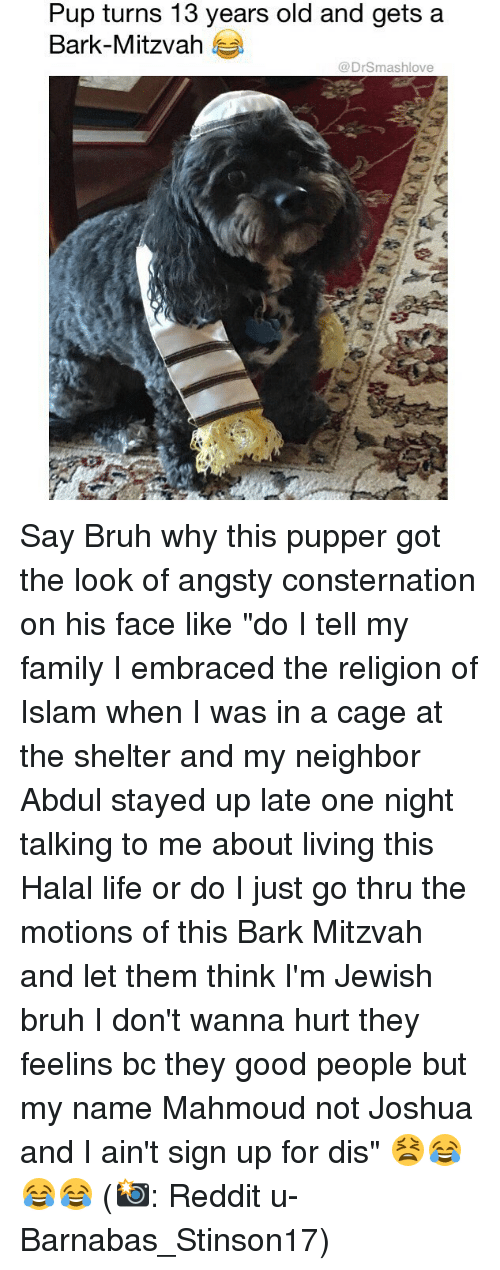 "Bruh, Family, and Life: Pup turns 13 years old and gets a  Bark-Mitzvah  @DrSmashlove Say Bruh why this pupper got the look of angsty consternation on his face like ""do I tell my family I embraced the religion of Islam when I was in a cage at the shelter and my neighbor Abdul stayed up late one night talking to me about living this Halal life or do I just go thru the motions of this Bark Mitzvah and let them think I'm Jewish bruh I don't wanna hurt they feelins bc they good people but my name Mahmoud not Joshua and I ain't sign up for dis"" 😫😂😂😂 (📸: Reddit u-Barnabas_Stinson17)"