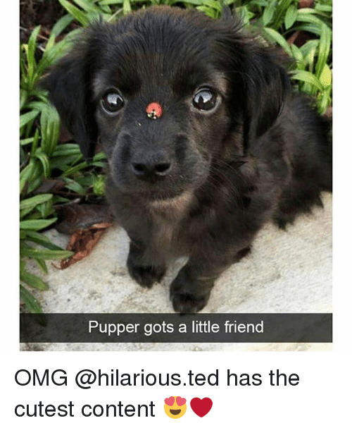Memes, Omg, and Ted: Pupper gots a little friend OMG @hilarious.ted has the cutest content 😍❤️
