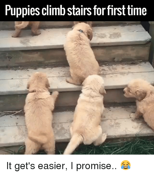 Dank, 🤖, and  Climb: Puppies climb stairs forfirst time It get's easier, I promise.. 😂