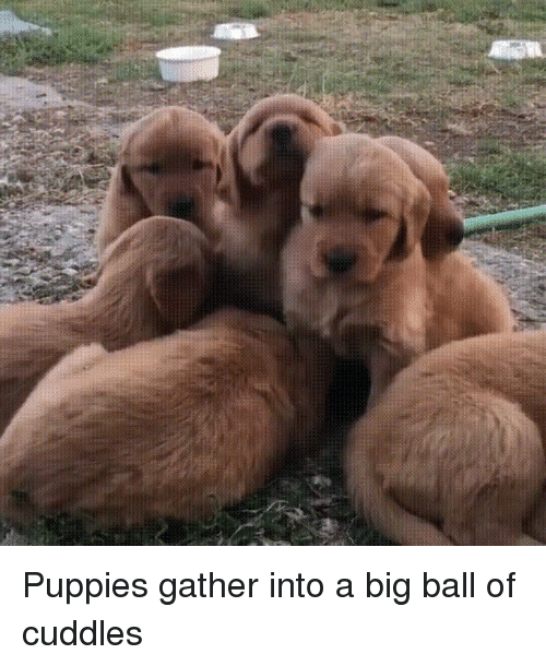 Puppies Gather Into A Big Ball Of Cuddles Puppies Meme On Meme
