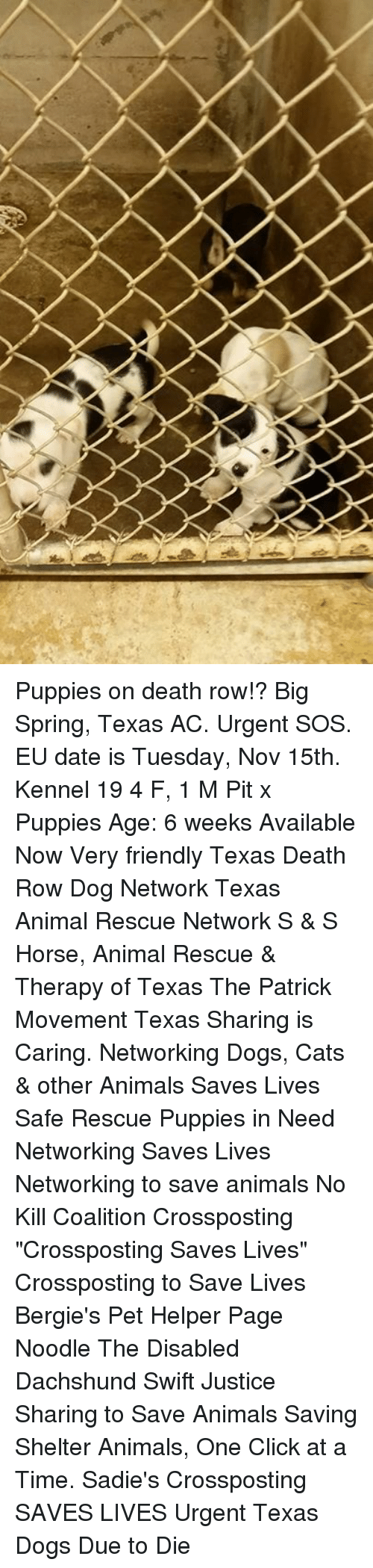 Https I When You Send A Risky Text Get That 4778871 Damn Love Indonesia New Kaos Pria Red Hd White Merah L Puppies On Death Row Big Spring Texas Ac Urgent Sos 6662937