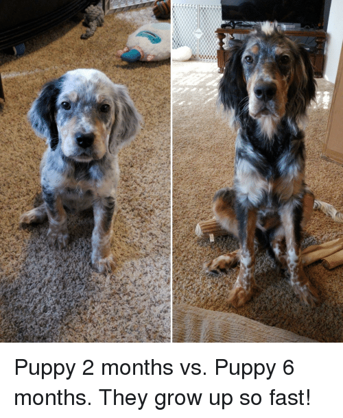 Puppy And Puppy Meme On Meme