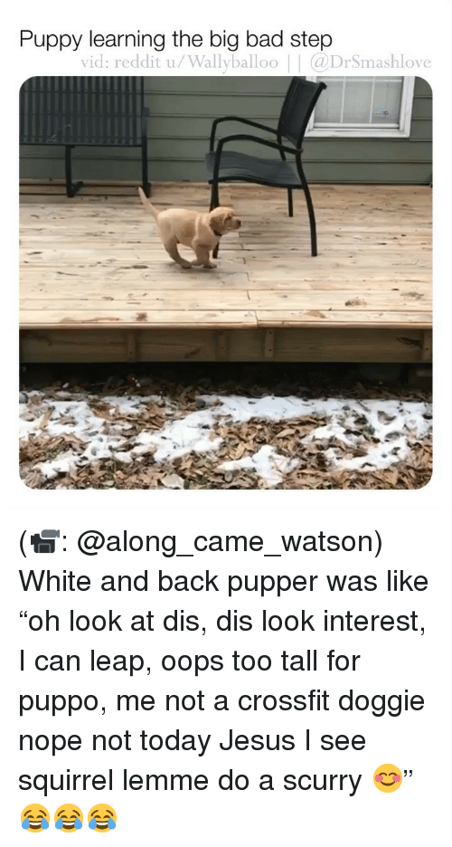 """Bad, Jesus, and Memes: Puppy learning the big bad step  vid: reddit u/Wallyballoo 