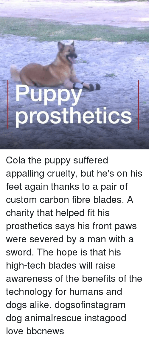 Dogs, Love, and Memes: Puppy  prosthetics Cola the puppy suffered appalling cruelty, but he's on his feet again thanks to a pair of custom carbon fibre blades. A charity that helped fit his prosthetics says his front paws were severed by a man with a sword. The hope is that his high-tech blades will raise awareness of the benefits of the technology for humans and dogs alike. dogsofinstagram dog animalrescue instagood love bbcnews