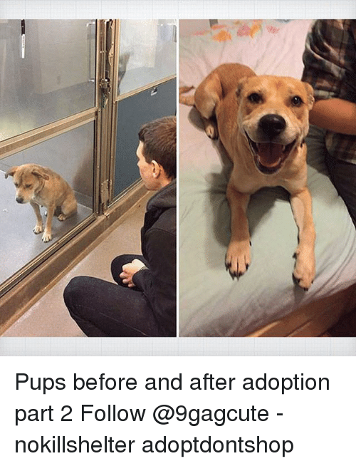 Memes, 🤖, and  Follow: Pups before and after adoption part 2 Follow @9gagcute - nokillshelter adoptdontshop