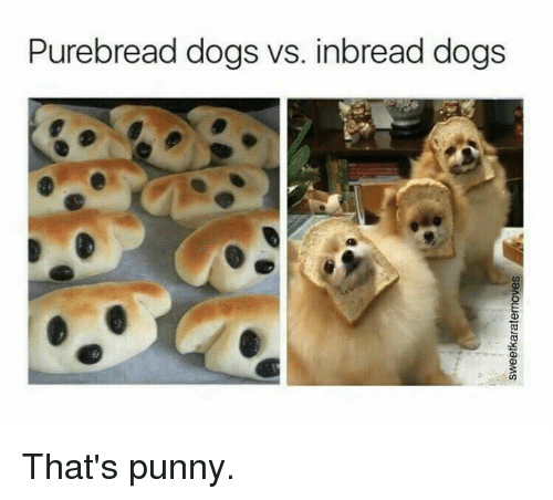 purebread dogs vs inbread dogs that s punny dogs meme on me me