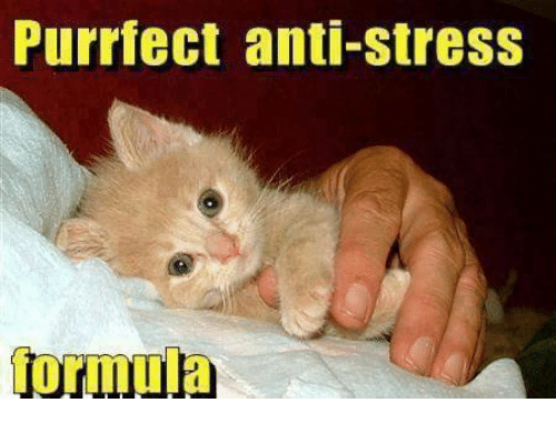 Funny Meme About Stress : Purrfect anti stress meme on me