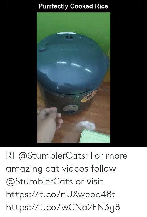 me.me: Purrfectly Cooked Rice RT @StumblerCats: For more amazing cat videos follow @StumblerCats or visit https://t.co/nUXwepq48t https://t.co/wCNa2EN3g8