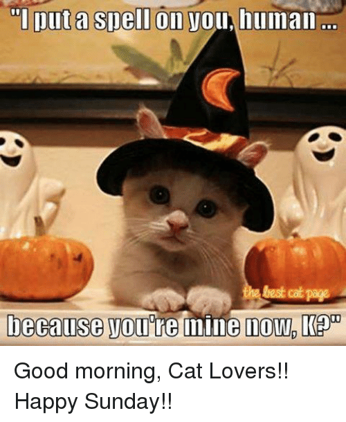 puta spell on vou human cat page because you re 5671299 ✅ 25 best memes about good morning cats good morning cats memes,Cat Lover Meme