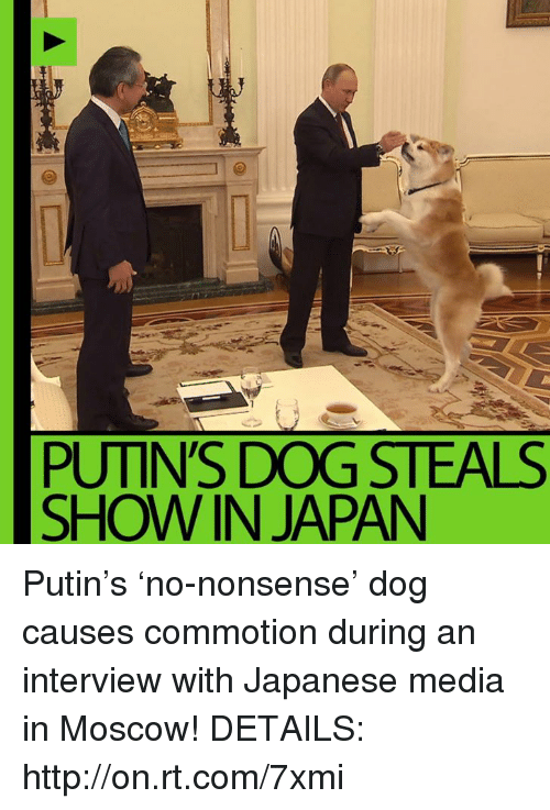 Memes, Japan, and Putin: PUTIN'S DOG STEALS  SHOW IN JAPAN Putin's 'no-nonsense' dog causes commotion during an interview with Japanese media in Moscow! DETAILS: http://on.rt.com/7xmi