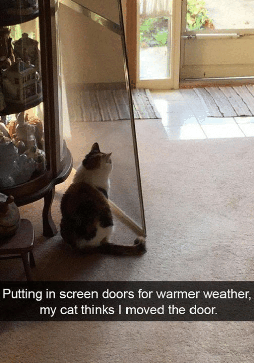 Memes, Weather, and 🤖: Putting in screen doors for warmer weather,  my cat thinks I moved the door