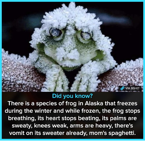 Frozen, Moms, and Winter: PVIA 8SHIT  Did you know?  There is a species of frog in Alaska that freezes  during the winter and while frozen, the frog stops  breathing, its heart stops beating, its palms are  sweaty, knees weak, arms are heavy, there's  vomit on its sweater already, mom's spaghetti.