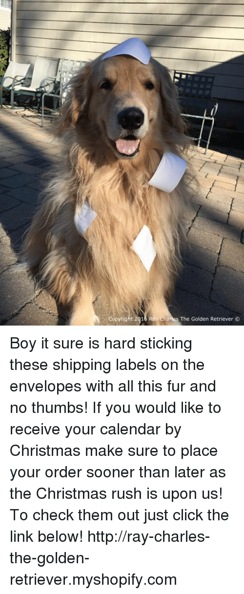 Memes, Calendar, and Golden Retriever: pyright 2016 Ray Charles The Golden Retriever  O Boy it sure is hard sticking these shipping labels on the envelopes with all this fur and no thumbs! If you would like to receive your calendar by Christmas make sure to place your order sooner than later as the Christmas rush is upon us! To check them out just click the link below! http://ray-charles-the-golden-retriever.myshopify.com