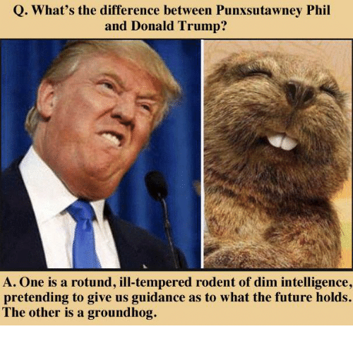 Donald Trump, Future, and Memes: Q. What's the difference between Punxsutawney Phil  and Donald Trump?  A. One is a rotund, ill-tempered rodent of dim intelligence,  pretending to give us guidance as to what the future holds.  The other is a groundhog.