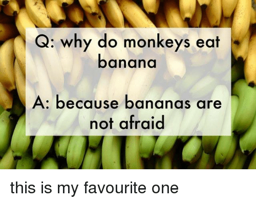 Q Why Do Monkeys Eat Banana A Because Bananas Are Not Afraid This Is