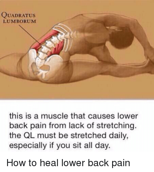 quadratus lumborum this is a muscle that causes lower back 11034376 25 best back pain memes in a memes, lifts memes, niagara memes