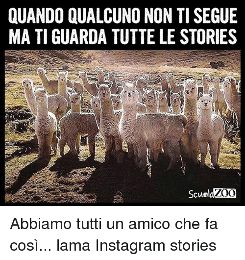 QUANDO QUALCUNO NON TI SEGUE MA TI GUARDA TUTTE LE STORIES ZOO ... 33e255bcff70