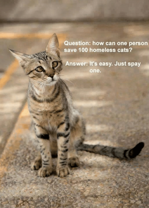 Cats, Homeless, and Memes: Question: how can one person  save 100 homeless cats?  Answer: It's easy. Just spay  one