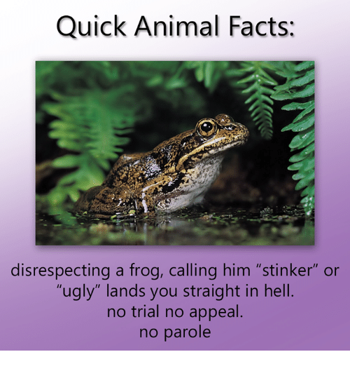 """Dank, Facts, and Ugly: Quick Animal Facts:  disrespecting a frog, calling him """"stinker"""" or  """"ugly"""" lands you straight in hell  no trial no appeal  no parole"""