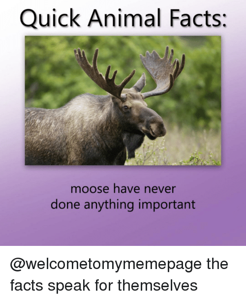 Facts, Animal, and Dank Memes: Quick Animal Facts:  moose have never  done anything important @welcometomymemepage the facts speak for themselves