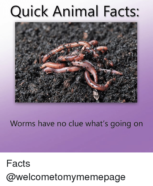 Facts, Animal, and Dank Memes: Quick Animal Facts;  Worms have no clue what's going on Facts @welcometomymemepage
