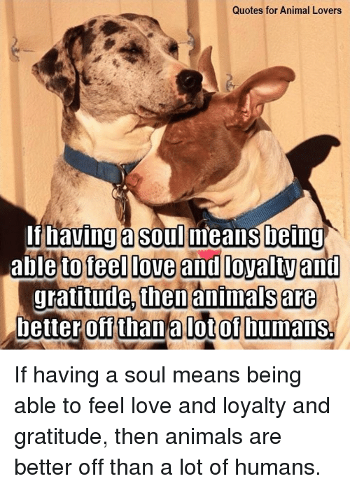 Quotes For Animal Lovers Being To Teel Love And Loyalty An Then