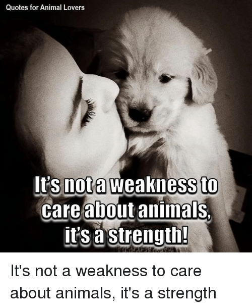 Quotes For Animal Lovers It S Not A Weakness To Care About Animals