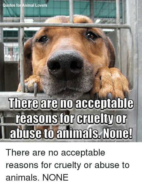 Quotes For Animal Lovers There Are No Acceutable Reasonsfor Cruelty