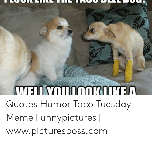 Quotes Humor Taco Tuesday Meme Funnypictures Wwwpicturesbosscom
