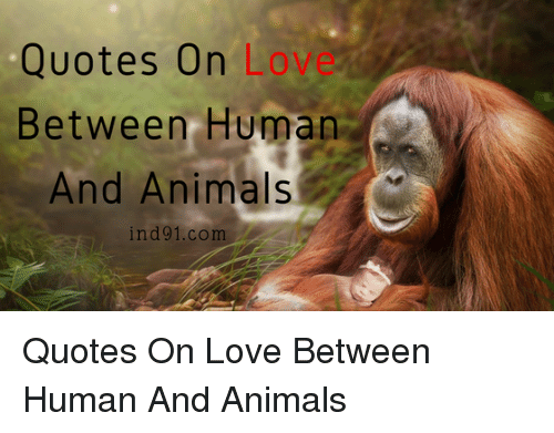 quotes on love between human and animals ind91com animals meme on