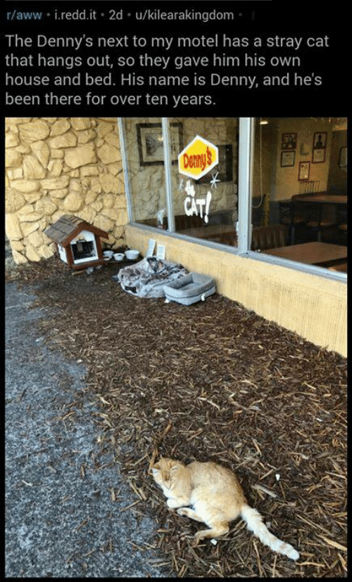 Aww, Denny's, and Memes: r/aww i.redd.it 2d u/kilearakingdom  The Denny's next to my motel has a stray cat  that hangs out, so they gave him his own  house and bed. His name is Denny, and he's  been there for over ten years.  Denny's