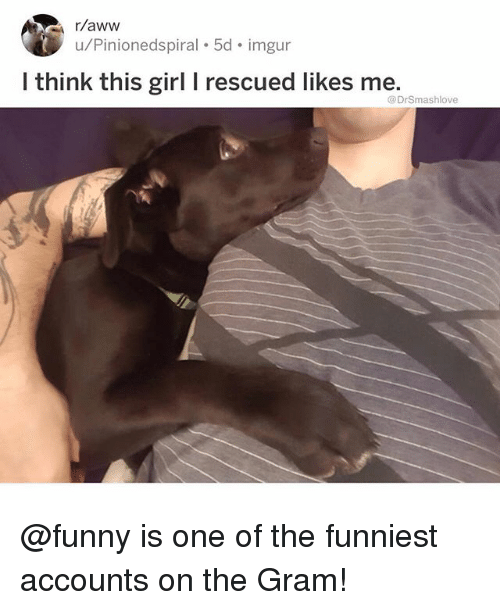 Aww, Funny, and Memes: r/aww  u/Pinionedspiral 5d. imgur  I think this girl I rescued likes me.  @DrSmashlove @funny is one of the funniest accounts on the Gram!