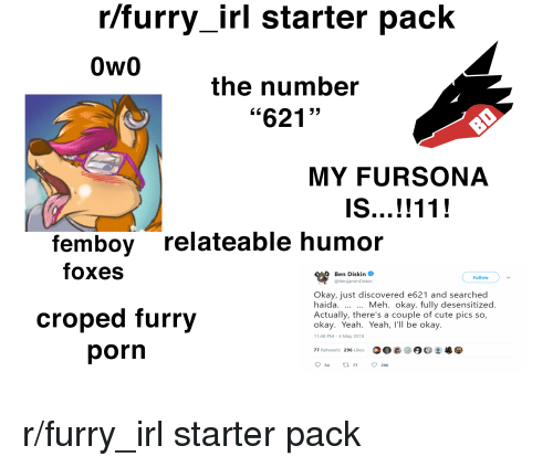 Rfurry Irl Starter Pack Ow0 The Number 621 My Fursona Femboy Relateable Humor Foxes Ben Distn O Follow Okay Just Discovered E621 And Searched Haida Actually There S A Couple Of Cute Pics So