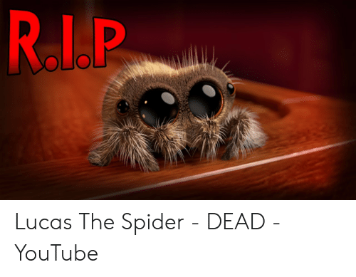 Rip Lucas The Spider Dead Youtube Spider Meme On Me Me