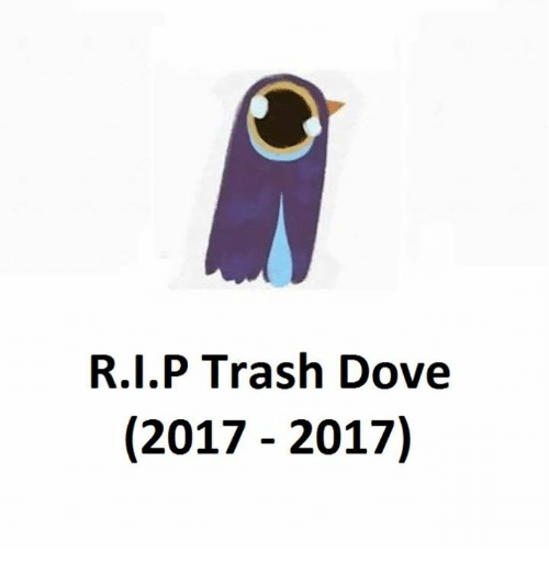 Doves, Trash Doves, and Trash Dove: R.I.P Trash Dove  (2017 2017)