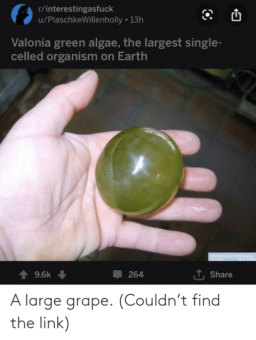 Earth, Link, and Single: r/interestingasfuck  u/PlaschkeWillenholly • 13h  Valonia green algae, the largest single-  celled organism on Earth  Ventricaria ventricosa  1, Share  264  9.6k A large grape. (Couldn't find the link)