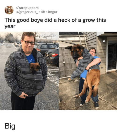 Memes, Good, and Imgur: r/rarepuppers  u/gregarious 4h imgur  This good boye did a heck of a grow this  year Big
