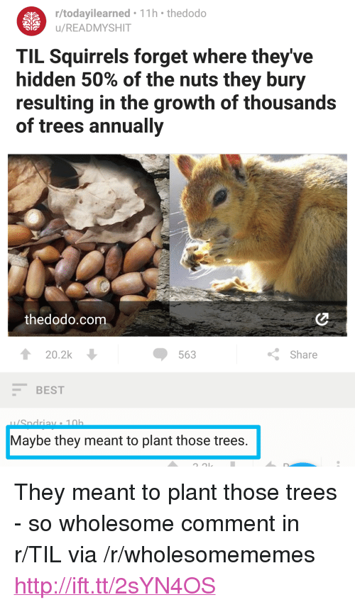 "Best, Http, and Trees: r/todayilearned 11h thedodo  u/READMYSHIT  TIL Squirrels forget where they've  hidden 50% of the nuts they bury  resulting in the growth of thousands  of trees annually  thedodo.com  20.2k  563  Share  BEST  Maybe they meant to plant those trees <p>They meant to plant those trees - so wholesome comment in r/TIL via /r/wholesomememes <a href=""http://ift.tt/2sYN4OS"">http://ift.tt/2sYN4OS</a></p>"
