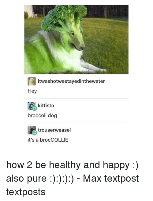 Dogs, Memes, and 🤖: ra it was lhotwestayedinthewater  Hey  kitfisto  broccoli dog  trouserweasel  it's a brocCOLLIE how 2 be healthy and happy :) also pure :):):):) - Max textpost textposts