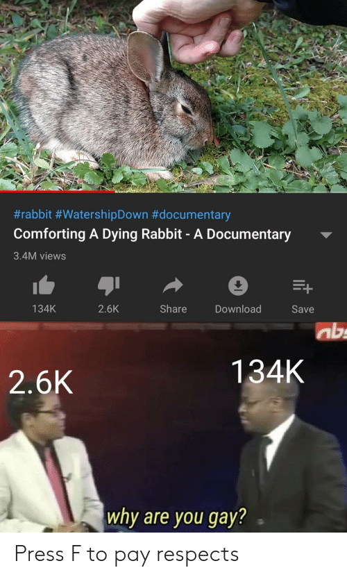 Rabbit, Gay, and Download:  #rabbit #WatershipDown #documentary  Comforting A Dying Rabbit- A Documentary  3.4M views  Share  134K  2.6K  Download  Save  ab  134K  2.6K  why are you gay? Press F to pay respects
